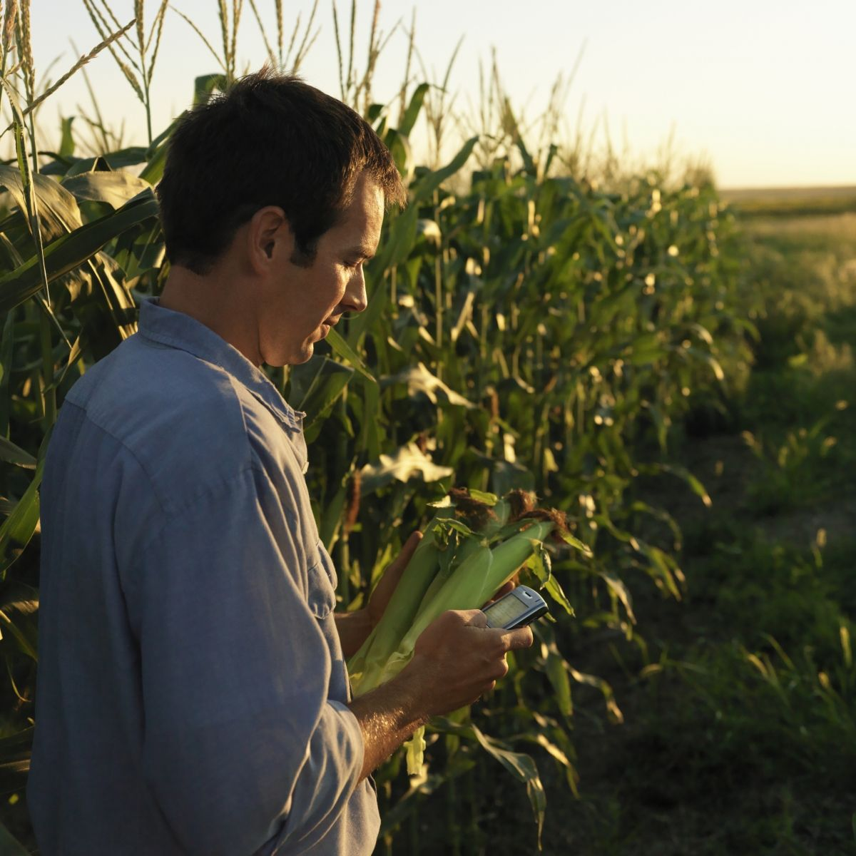 Ρυθμίσεις για τους αγρότες του ειδικού καθεστώτος ΦΠΑ.