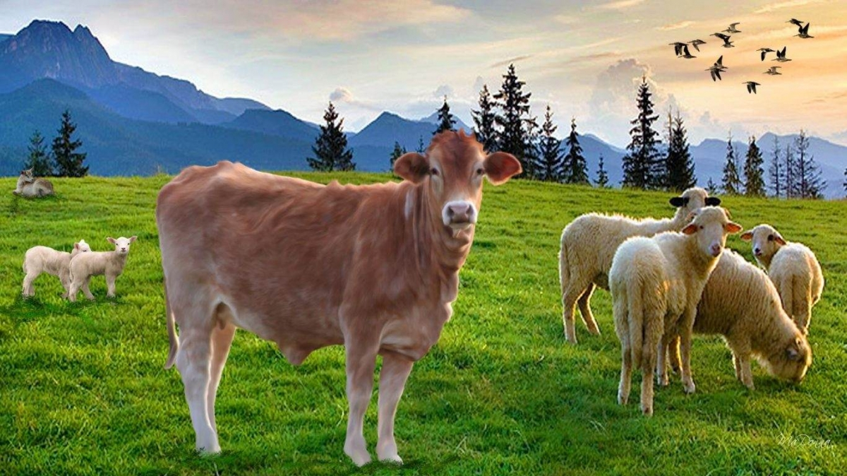 Στερούνται μόρια, χάνουν τα Σχέδια  οι κτηνοτρόφοι
