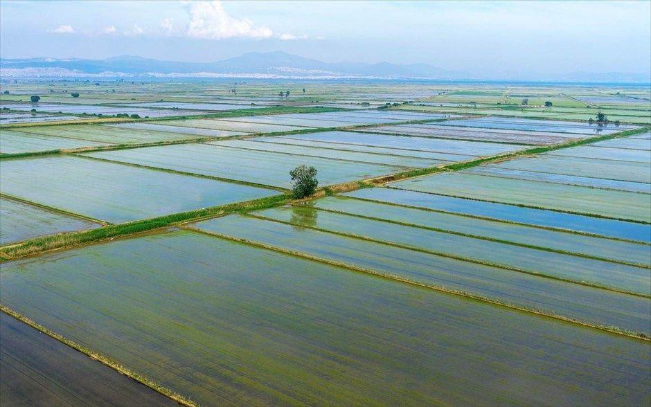 Επιδότηση για ρυζοκαλλιέργεια 21 €/στρ./έτος