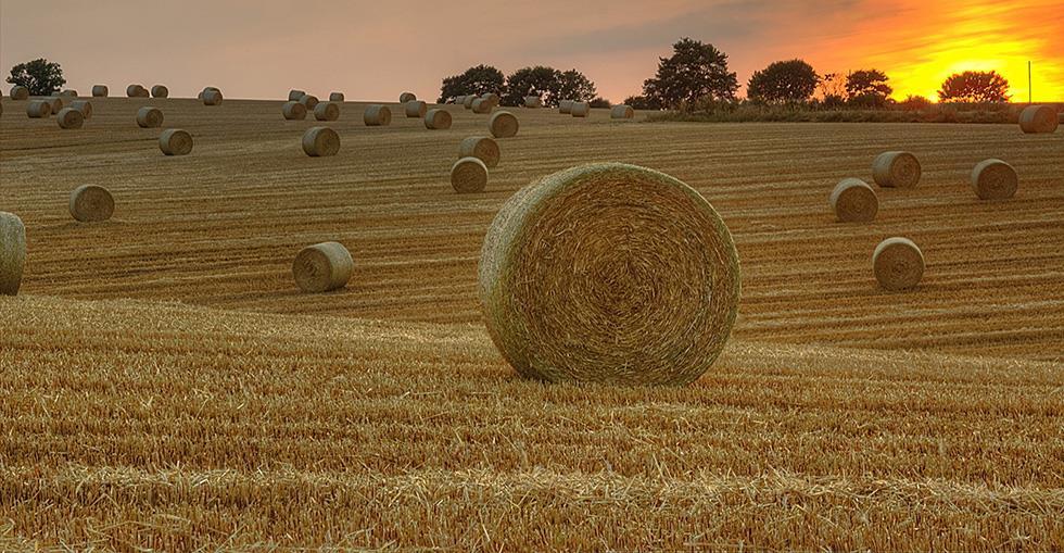 Η αγορά αγροτεμαχίου ή/και η ανέγερση αποθήκης από αγρότη είναι τεκμήριο και αυξάνει την φορολογία του;