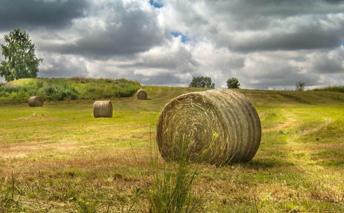 Ποιο θεωρείται αγροτικό εισόδημα (έκπτωση φόρου) και ποιο όχι;