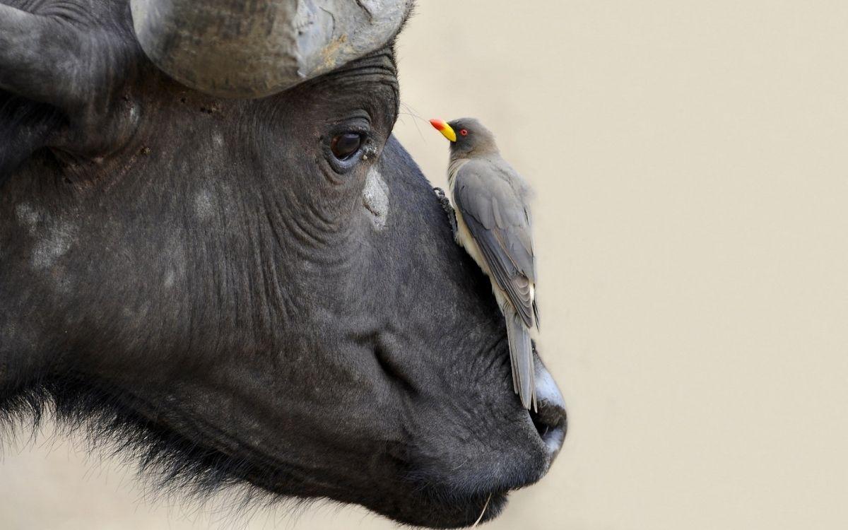 Επιδότηση από το Υπομέτρο 10.1.09: Διατήρηση απειλούμενων αυτόχθονων φυλών αγροτικών ζώων