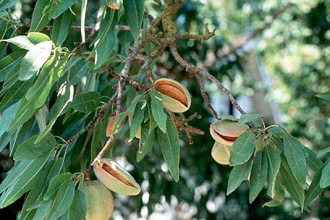 Ακρόδρυα, μηλιές και βύσσινα στη δάσωση γαιών