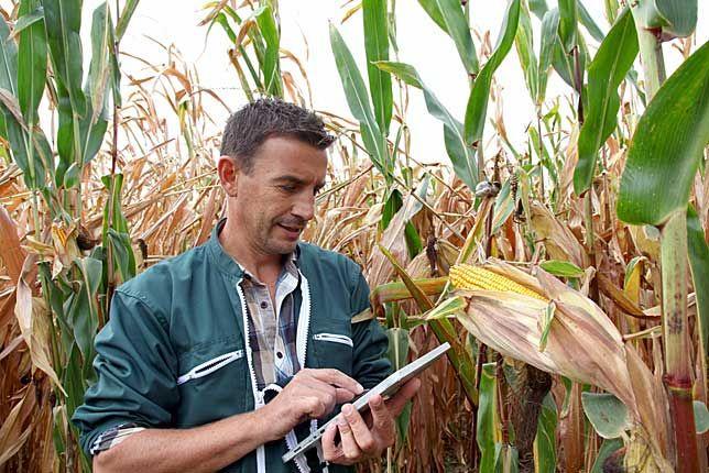 Πόσο είναι το μέγιστο εισόδημα που πρέπει να δηλώσει ο αγρότης για να πληρώσει το ελάχιστο σε εφορία και ΟΓΑ;