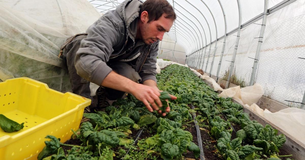 Ποια είναι τα κριτήρια βαθμολογίας για την ένταξη στο νέο πρόγραμμα των Νέων Γεωργών;