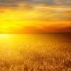 Οι αγρότες στην Κίνα αντί να καίνε τα άχυρα τα μετατρέπουν σε …χρυσάφι